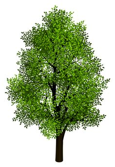 Dead Tree PNG Clipart.