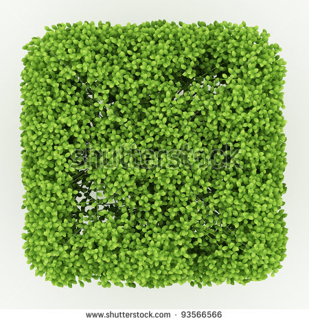 Side View Square Bush Isolated Over Stock Illustration 93566569.