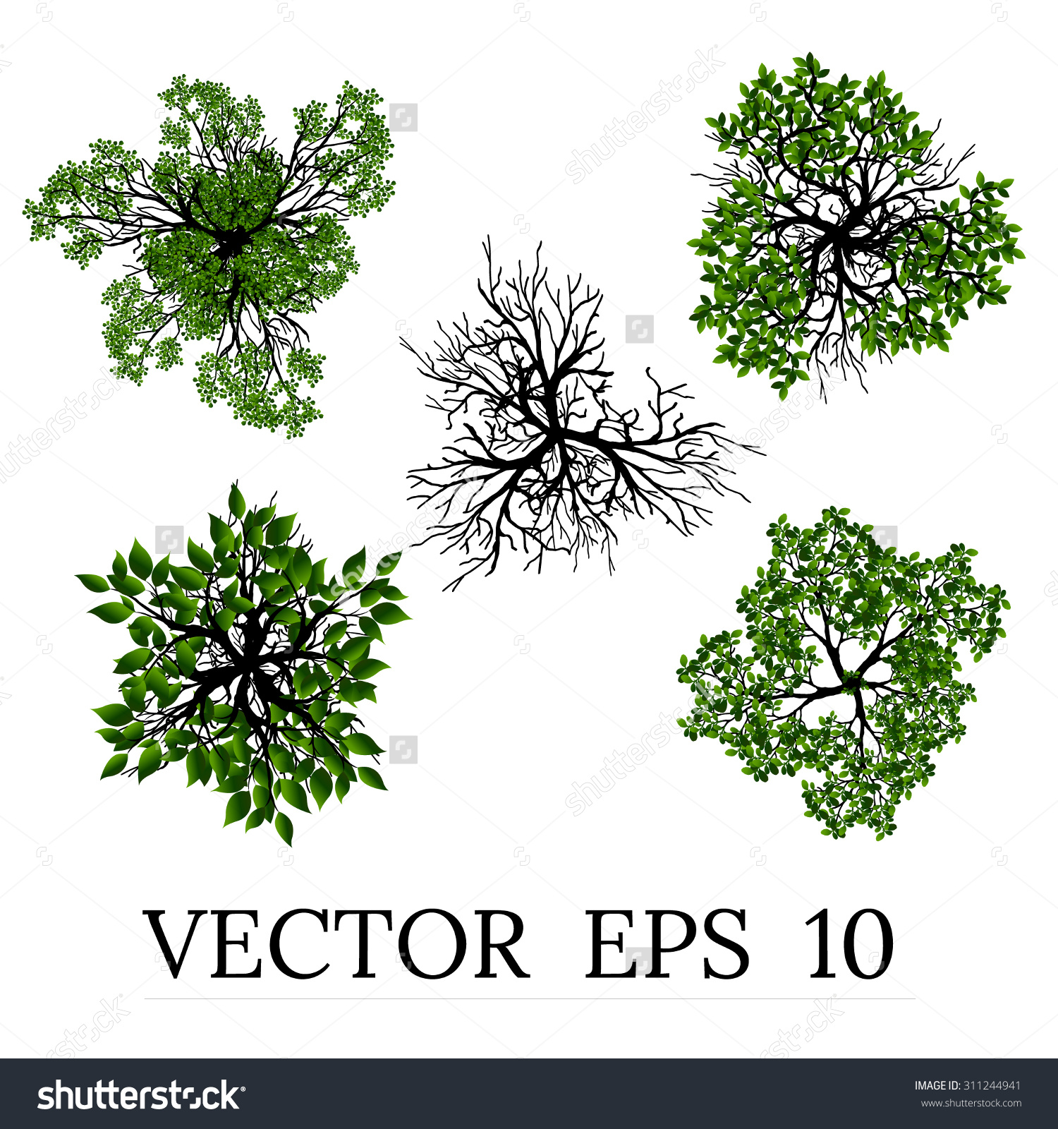 Trees Top View Landscape Vector Illustration Stock Vector.