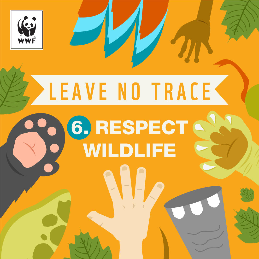 Image result for leave no trace vector.