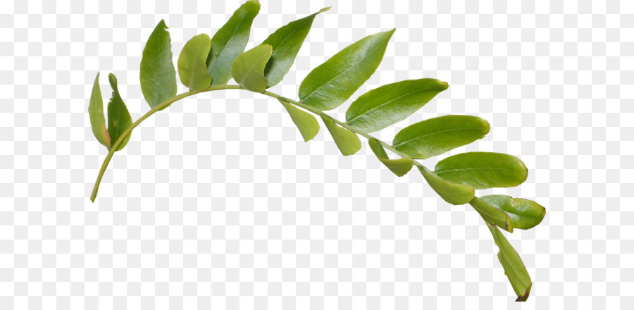 Download Free png Leaf Clip art Leaves Png Hd png download.