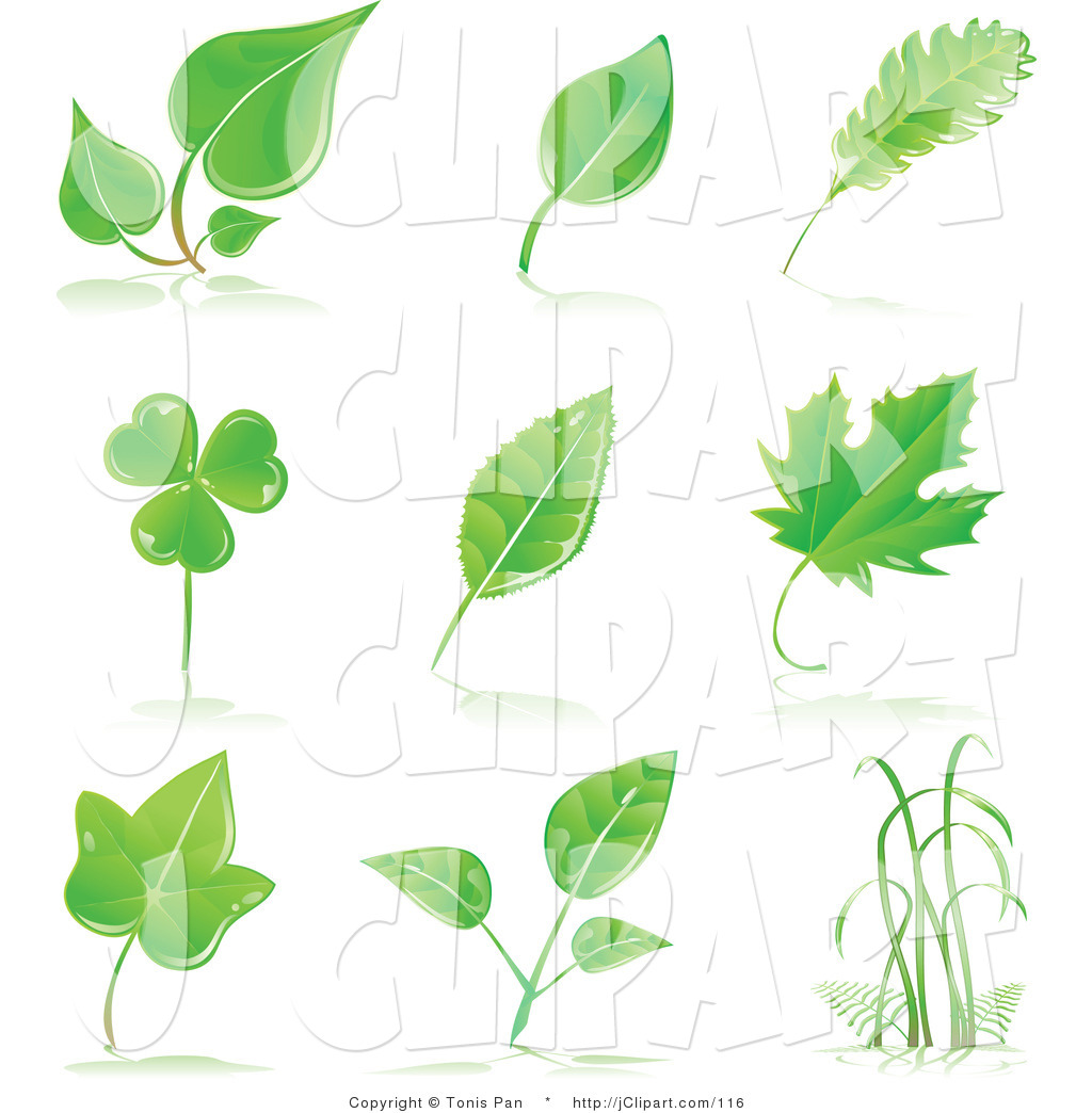 Royalty Free Plant Stock Designs.