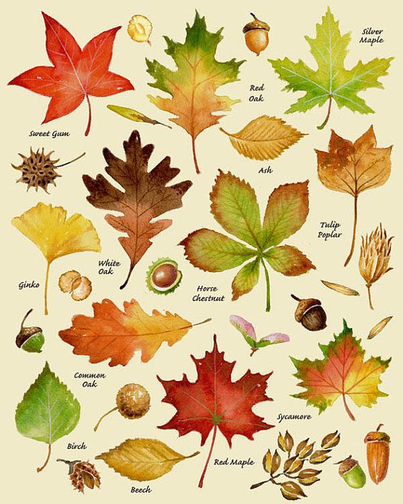1000+ ideas about Leaves on Pinterest.