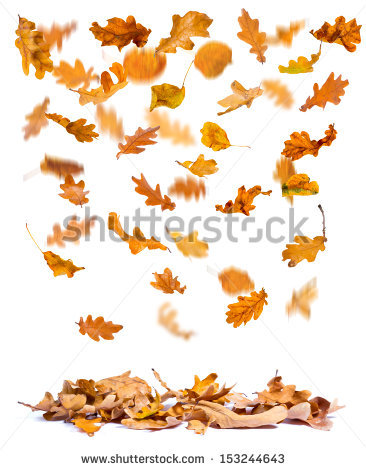 Falling Leaves Stock Images, Royalty.