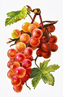 1000+ images about grapes for barrel on Pinterest.