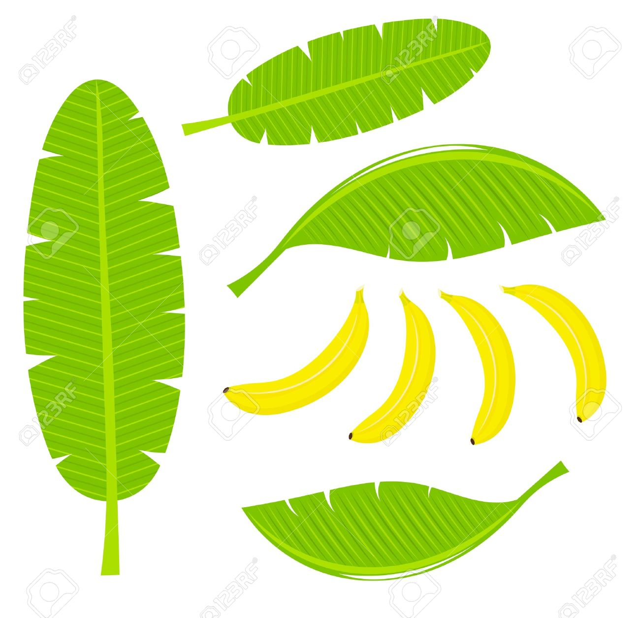 Banana Leaves And Fruits Illustration Royalty Free Cliparts.