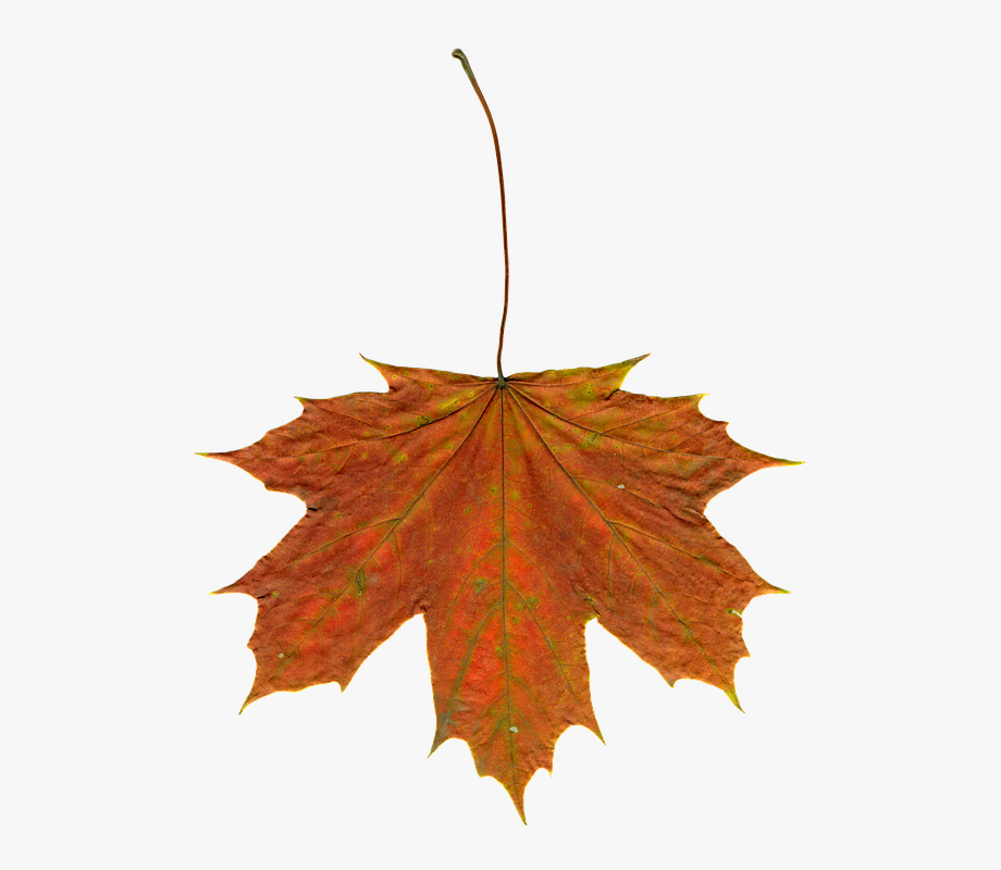 Fall Leaves Free Photo Leaves Autumn Clipart Image.