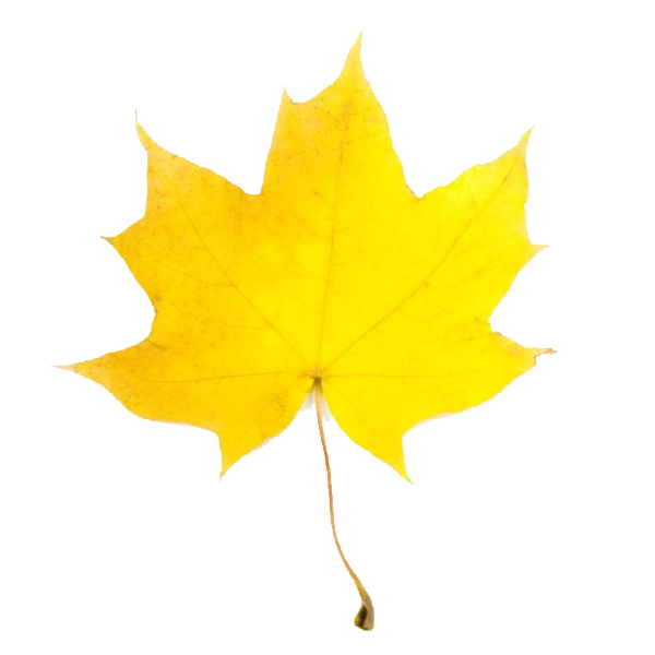 Fall Leaves Clip Art, Download Free Clip Art on Clipart Bay.