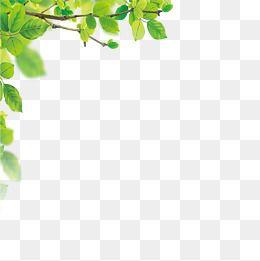Leaves Border, Leaves, Frame, Vine PNG Transparent Clipart.
