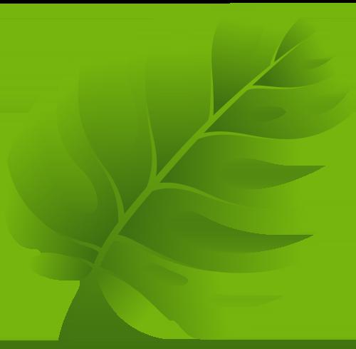 Leaf Clipart Transparent PNG Image #31.
