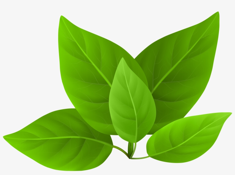 Green Leaves Clipart PNG Image.