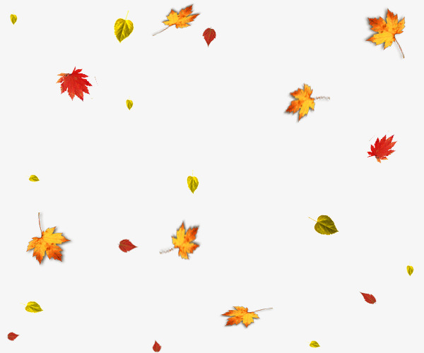 Autumn Leaves Falling, Akiba, Maple Leaf, Fall PNG.