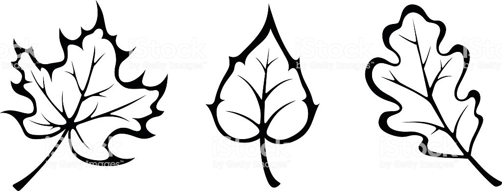 Fall leaves clipart black and white 2 » Clipart Station.