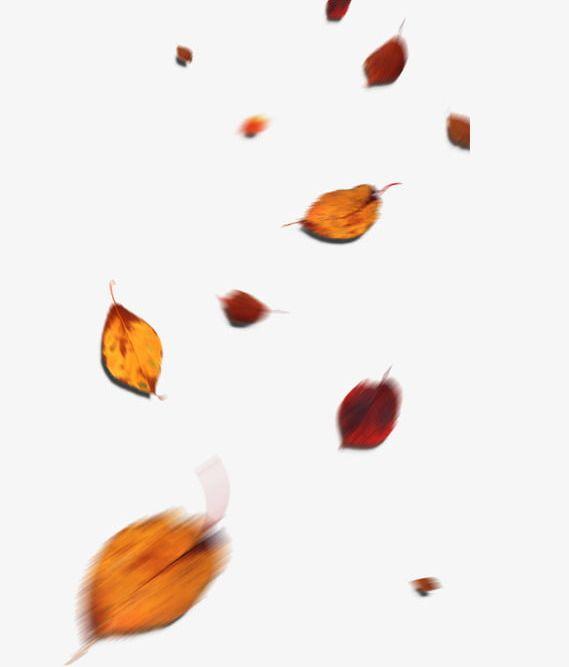 Falling Leaves Fall PNG, Clipart, Deciduous, Deciduous.