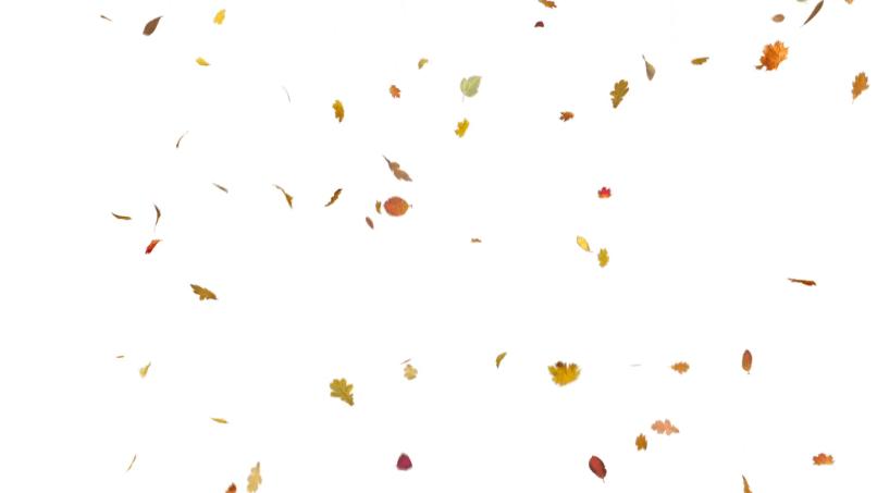 Leaf Falling Png.
