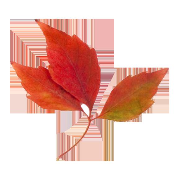 Fall Foliage Clipart.