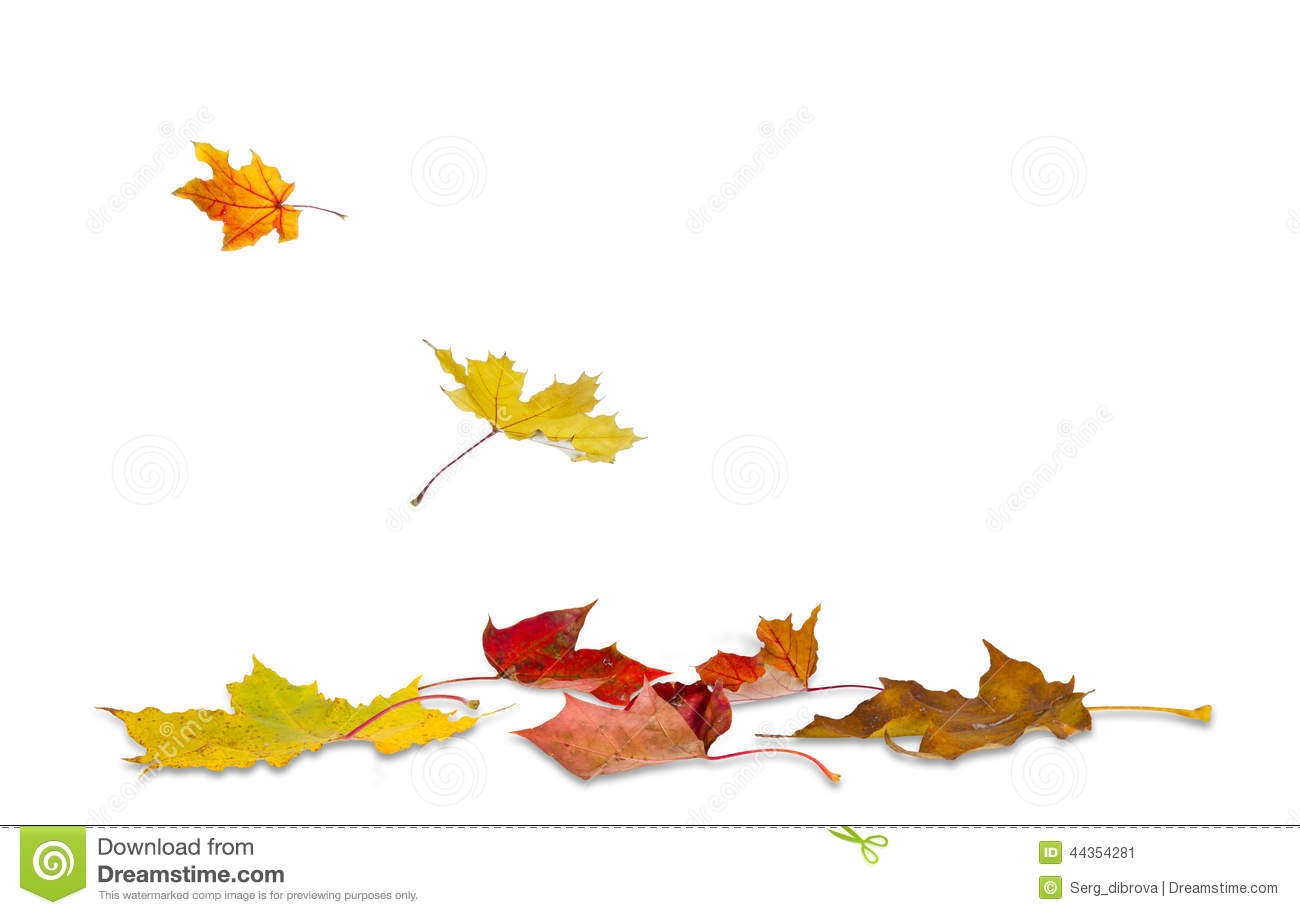 Dry Autumn Leaves Ground Stock Illustrations.