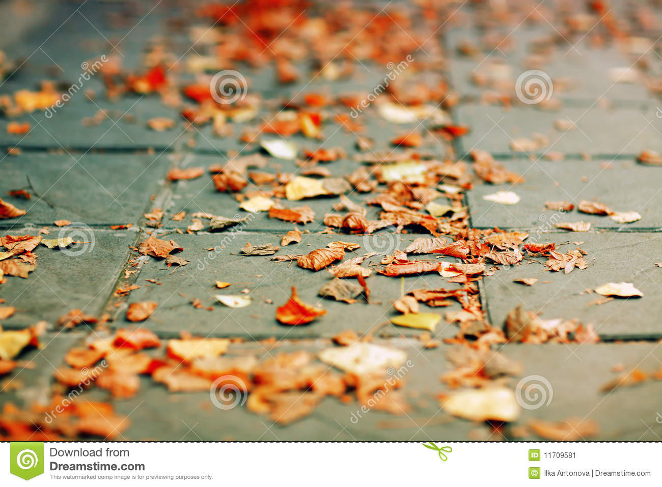 Leaves On Ground Clipart.