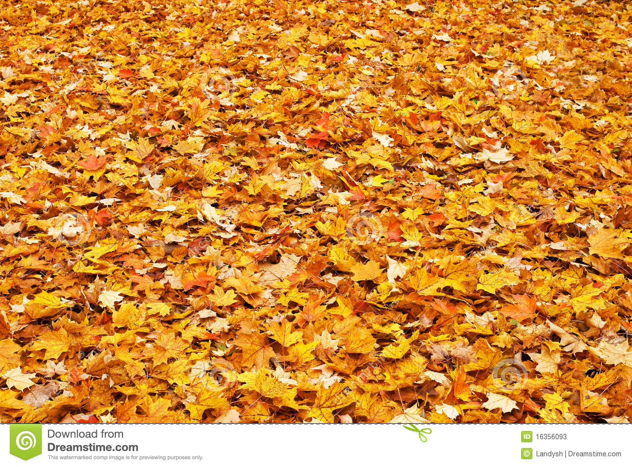 Red Yellow Colored Fall Leaves On The Ground Stock Photos.