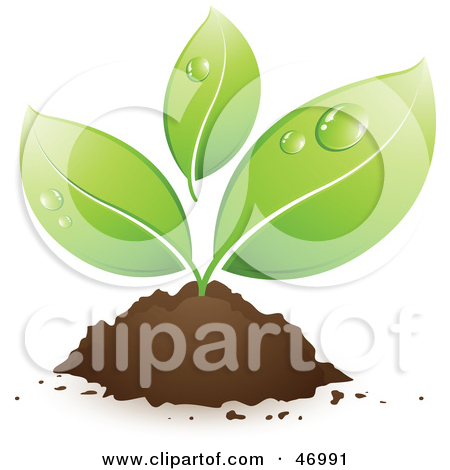 Leaves grow clipart #18