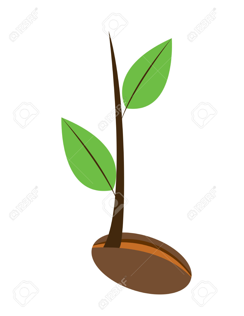 Leaves grow clipart #15