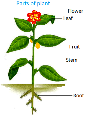 How Plants Grow And Change Big Plants Leaves Prepare Food For The.