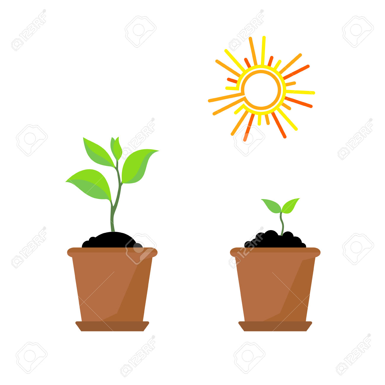 Line Sprout And Plant Growing. Linear Nature Leaf, Grow Tree.