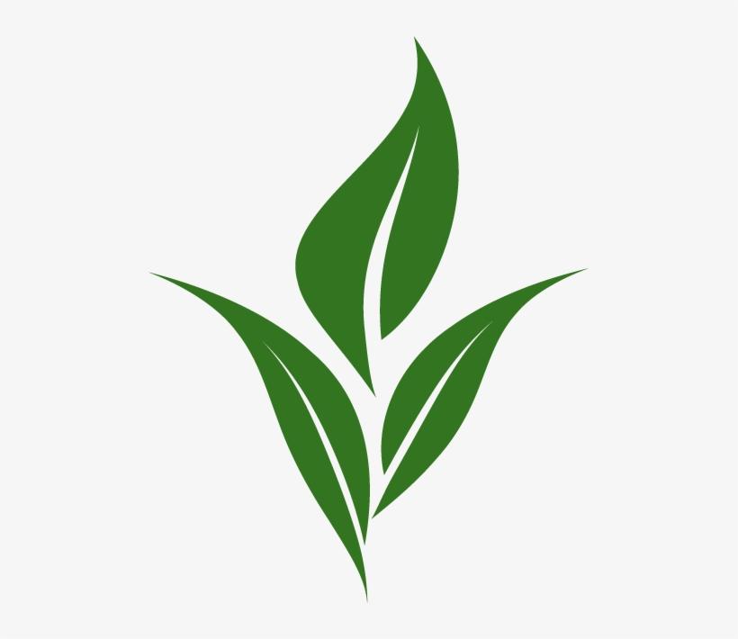 Tea Leaf Logo.
