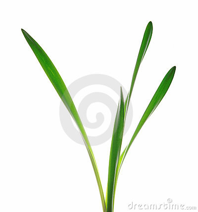 Leaves of grass clipart.