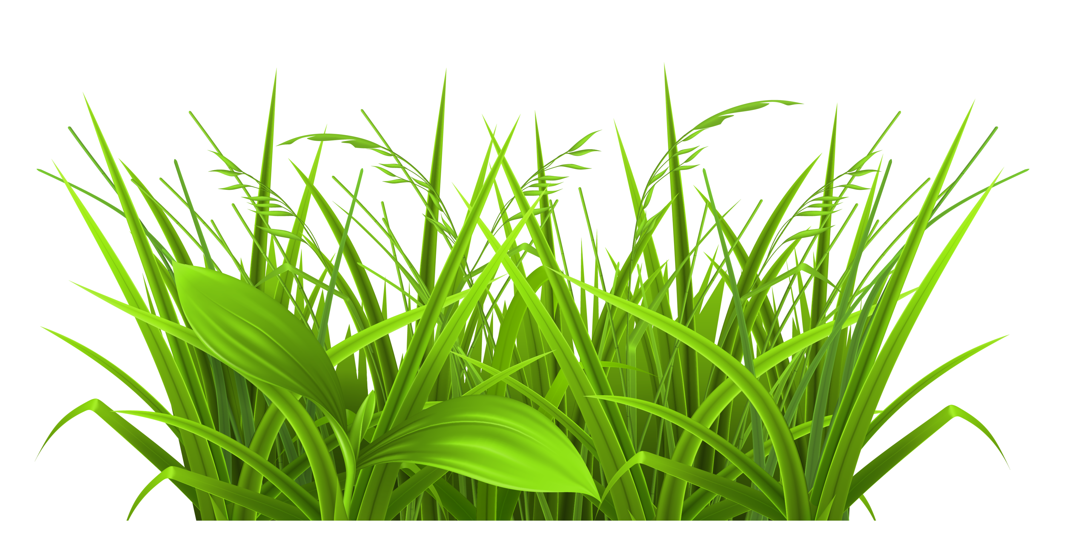 Showing post & media for Cartoon grass leaves.