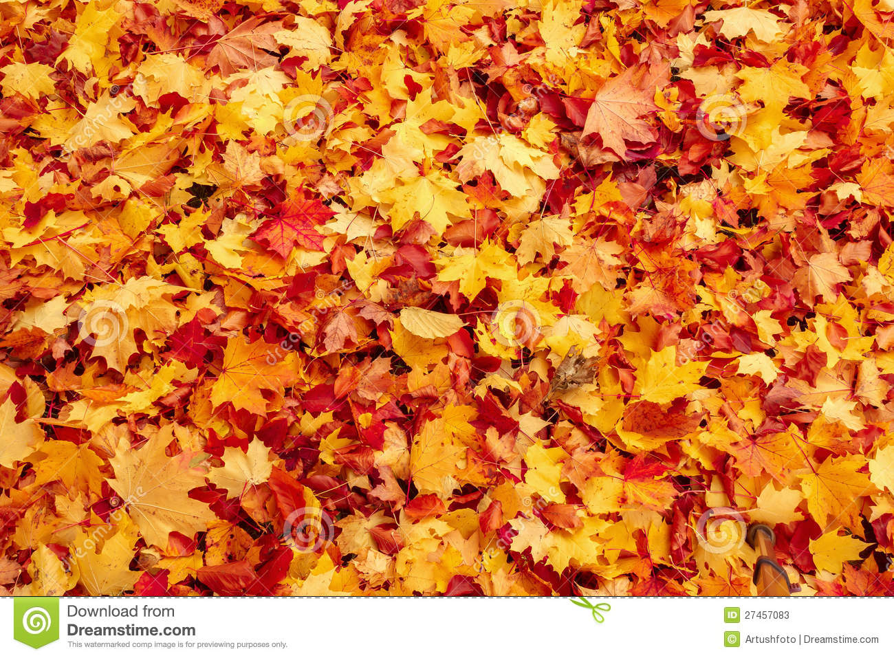 The Leaves On Ground Clip Art.