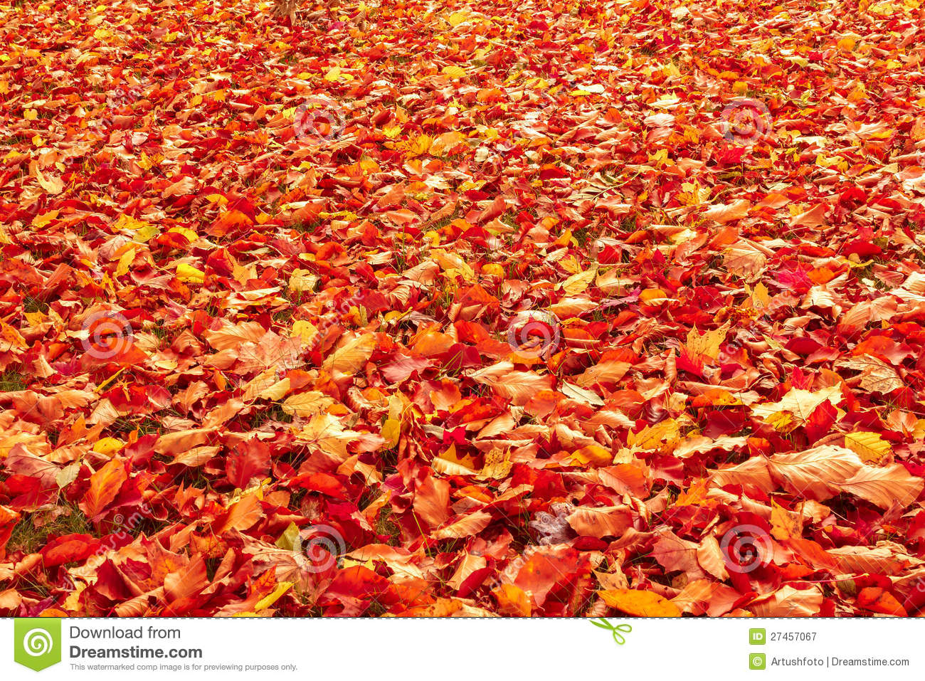 Fall Orange And Red Autumn Leaves On Ground Royalty Free Stock.