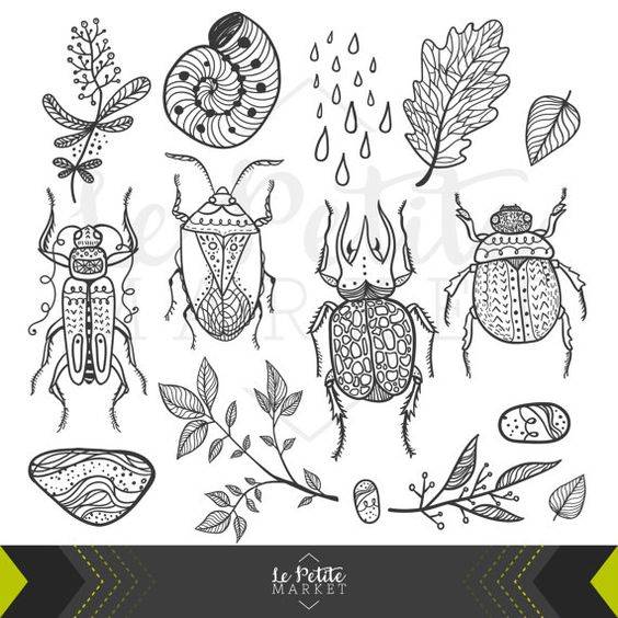 Hand Drawn Beetle Nature Insect Clip Art Set, Digital Beetles.