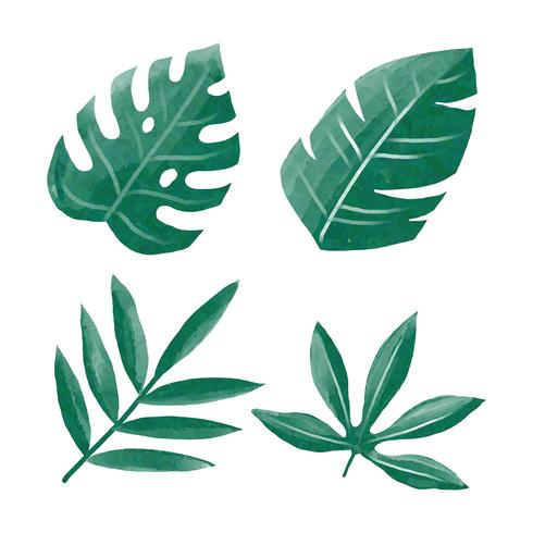 Water Color Tropical Green Leaves Clipart Set Vector.