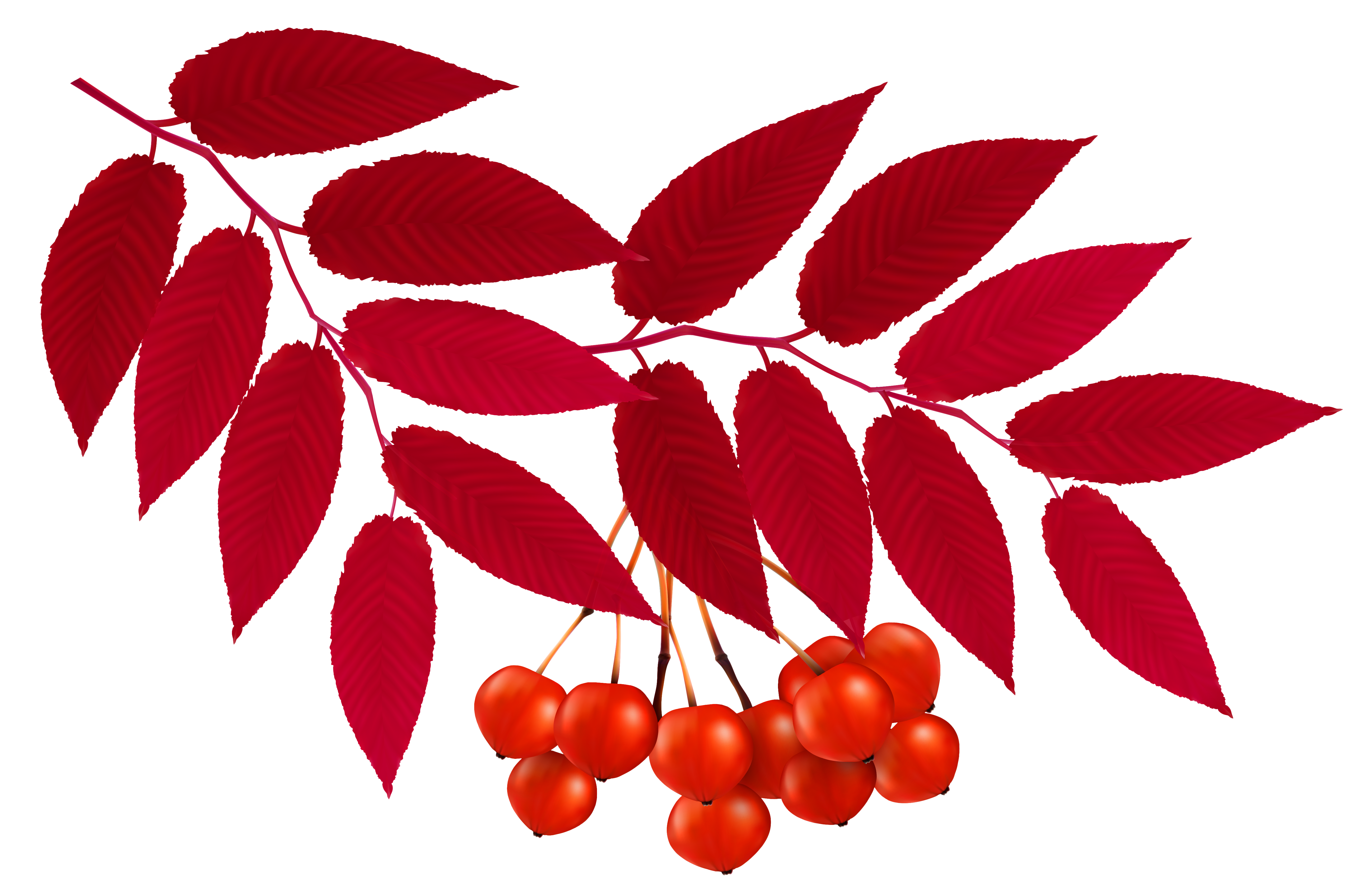 Red Leaves Clip Art.