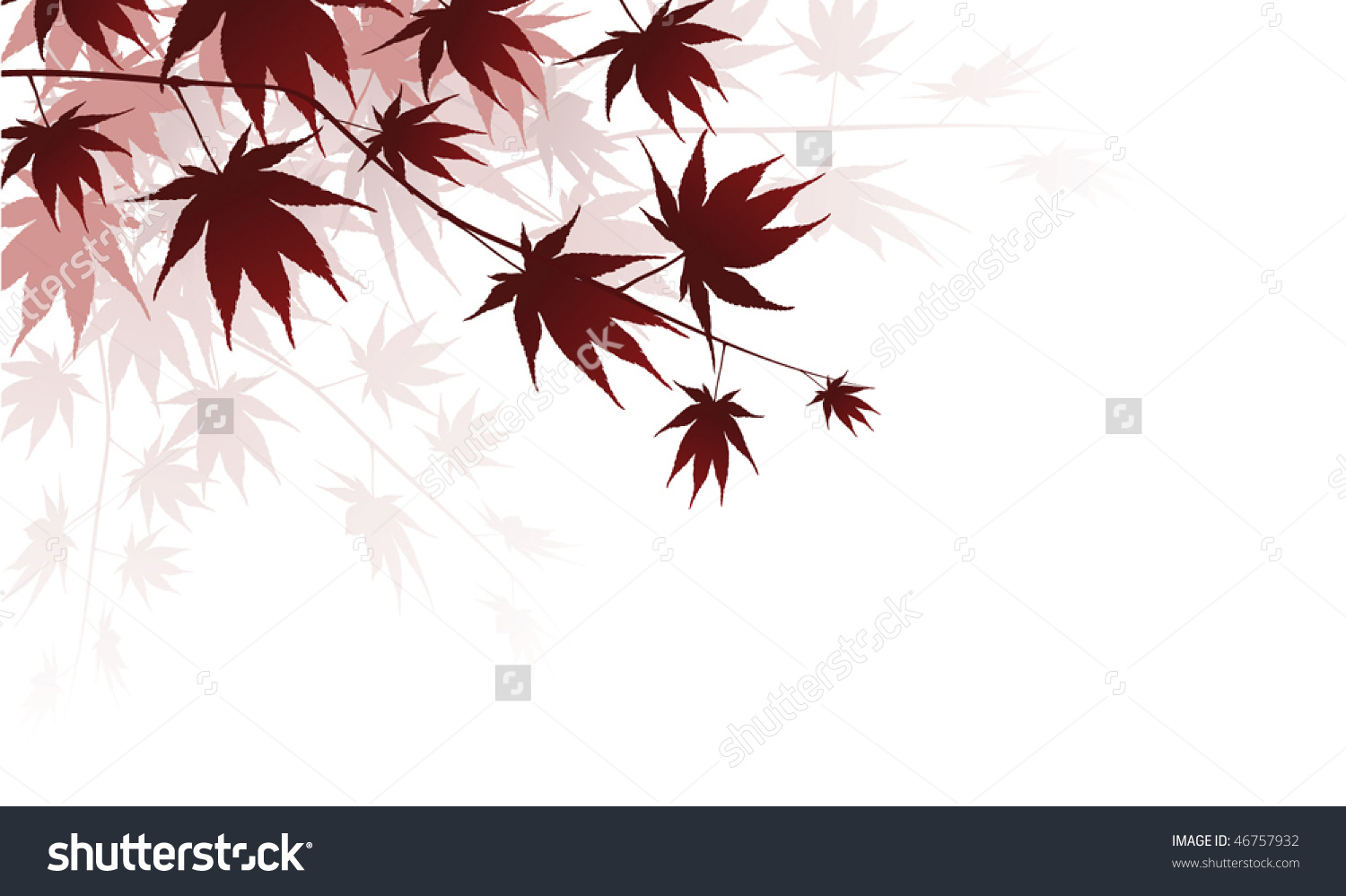 Beautiful Japanese Maple Leaf Splash Stock Vector 46757932.