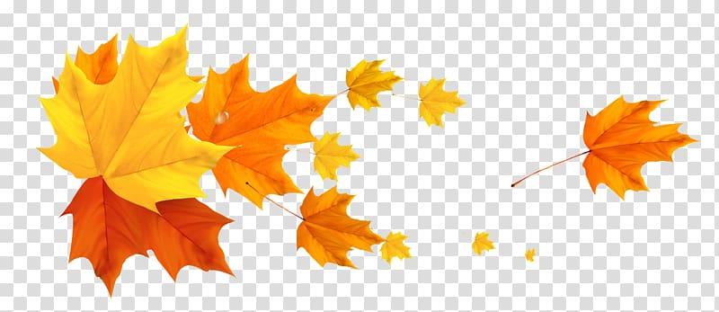 Color Banner Autumn Leaf, autumn leaves transparent.