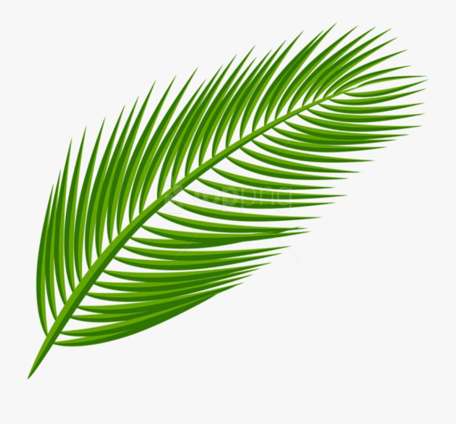 Palm Leaves Transparent Background , Free Transparent.