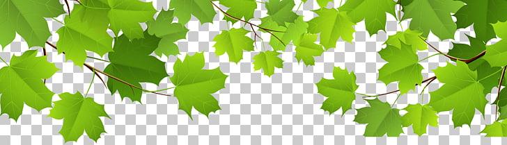 Leaf , Decorative Leaves Transparent , green leafed plant.