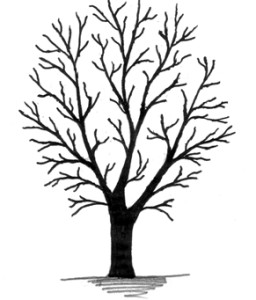 Clipart Tree No Leaves.