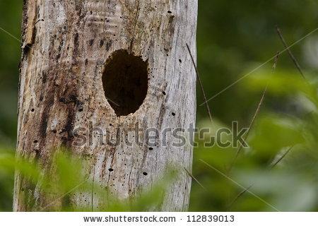 Bird Nest Hole Tree Trunk Surrounded Stock Photo 112839013.