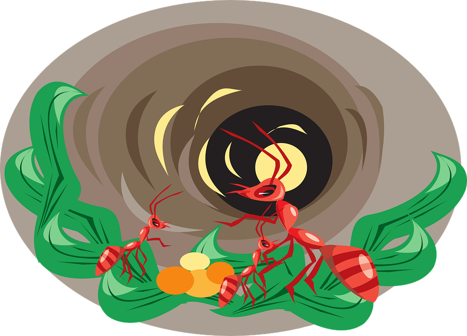 Free vector graphic: Hole, Leaves, Insects, Dirt, Nest.