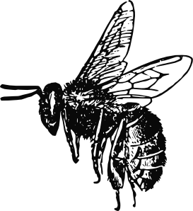 Bee Clip Art at Clker.com.