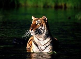 """Über 1.000 Ideen zu """"Zoo In India auf Pinterest""""."""