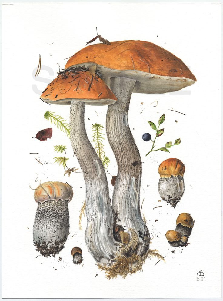 1000+ images about fungi on Pinterest.