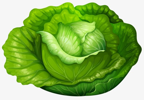 Lettuce clipart cabbage roll, Lettuce cabbage roll.