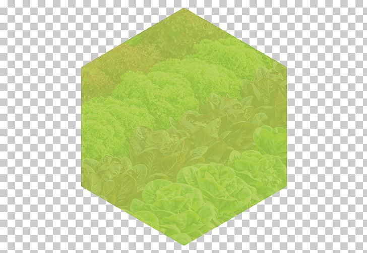 Polymer Vegetable Infant Customer, LECHUGA PNG clipart.
