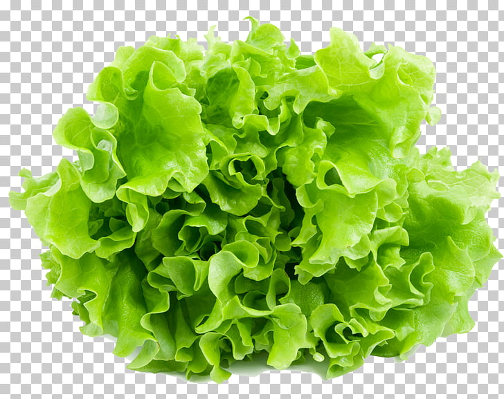Lechuga lechuga lechuga lechuga romana endibia, lechuga PNG.