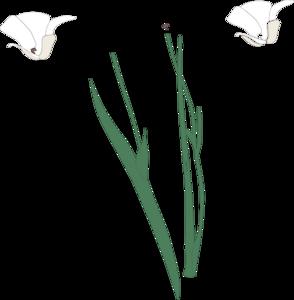 White Flowers Clip Art at Clker.com.