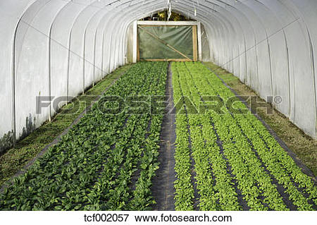Picture of Germany, Upper Bavaria, Weidenkam, View of greenhouse.
